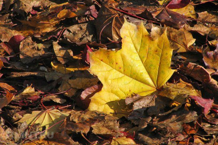 Как использовать опавшие листья